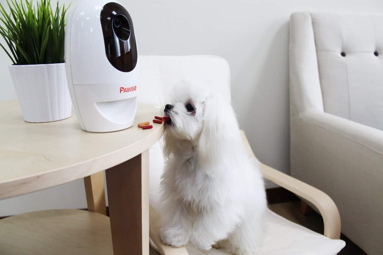 Pawbo Pet Camera - Best Pet Camera