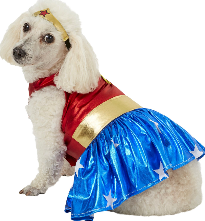 small dog halloween costume
